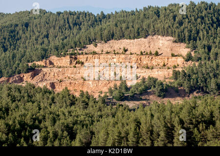 Forest clearing (pine tree cutting) Mantoudi, in the northern part of Euboea (Evia) island, The forest of Aleppo - Stock Photo