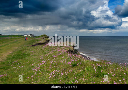 Couple in the distance walking along coastal path with Sea thrift (Armeria maritima) at Weybourne, Norfolk, England, - Stock Photo