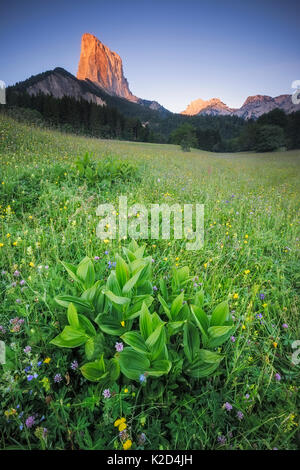 View of Le Mont Aiguille at sunrise with wildflower meadow in the foreground, Vercors Regional Natural Park, Vercors, - Stock Photo