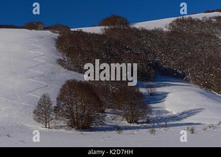 Ski tracks in snow in the Central Apennines Rewilding Area, Italy, November 2013. - Stock Photo