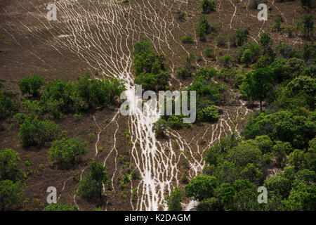 Aerial view of Cattle trails on Rupununi savanna, Guyana, South America - Stock Photo