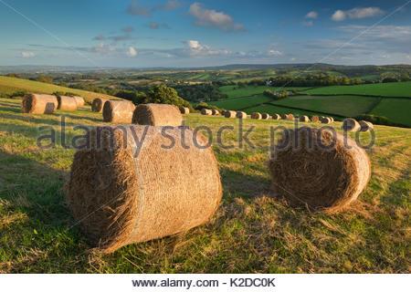 Hay Bales in autumn fields of Mid Devon, England, UK. September 2012. - Stock Photo