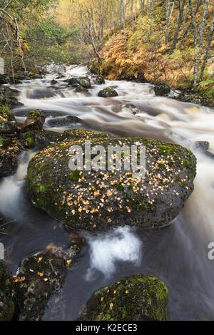 River / Burn flowing through woodland, Glen Affric National Nature Reserve, Highland, Scotland, October 2015. - Stock Photo