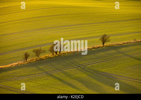 Low winter light casting long tree shadows  on fields, Buckinghamshire, England, November 2015. - Stock Photo