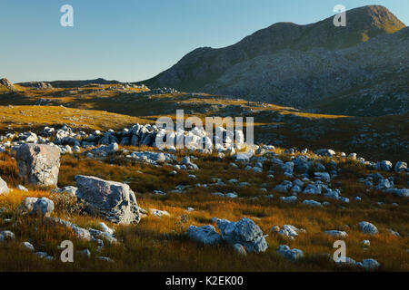 Rocks and vegetation in Hottentots Holland Mountains, Western Cape, South Africa, December 2014. - Stock Photo