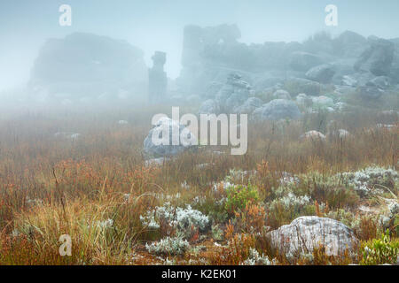 Rocks and vegetation in the mist at dawn, Hottentots Holland Mountains, Western Cape, South Africa, December 2014. - Stock Photo
