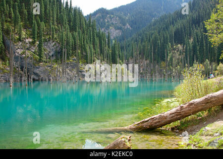 Submerged forest at Kaindy Lake with Schrenk's spruce (Picea schrenkiana) trees, Lake Kaindy, Kazakhstan. August - Stock Photo
