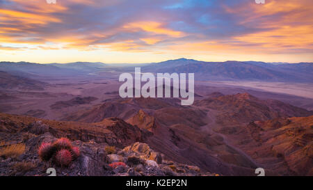 Sunrise over Death Valley (from Corkscrew Peak) with Cottontop cactus  (Echinocactus polycephalus). View extending - Stock Photo
