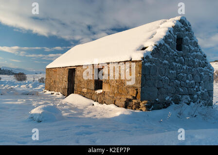 Rural countryside abandoned croft covered in snow on a sunny winters day, Rogart, Sutherland, Highlands, Scotland, - Stock Photo