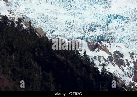 Kawakarpo Mountain covered in snow, with conifer trees, Meri Snow Mountain National Park, Yunnan Province, China, - Stock Photo