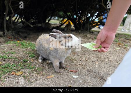 Wild rabbits found on Okunoshima Island, Japan. - Stock Photo