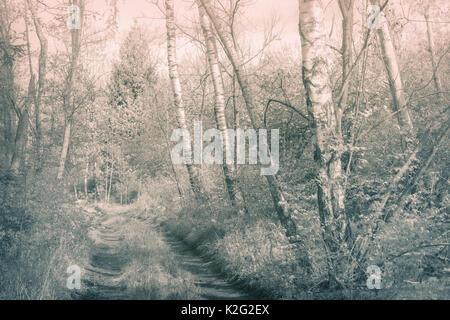 Artistic monochrome photo of a path within a deep forest. Soft focus, pastel colors, warm tones. - Stock Photo