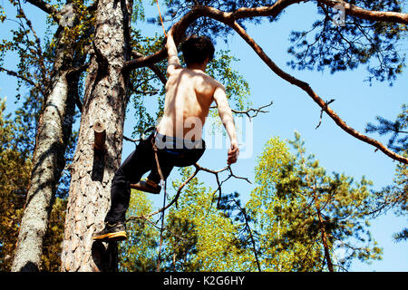 young man climbing on tree with rope - Stock Photo