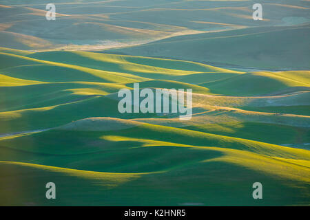 Springtime on the rolling hills of the Palouse in Washington State's Whitman County. - Stock Photo