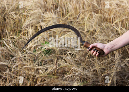 Old rusty sickle in a girl's hand against the background of a field with ripe wheat in late August - Stock Photo