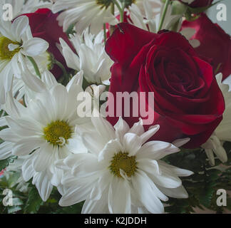 Rose and marguerites flowers - Stock Photo