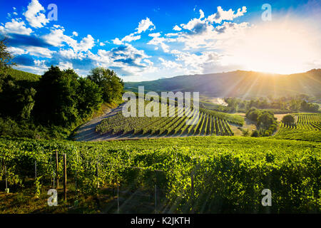 Spectacular sunset over the green vineyards of Langa Piedmont, the blue sky is full of suggestive clouds - Stock Photo