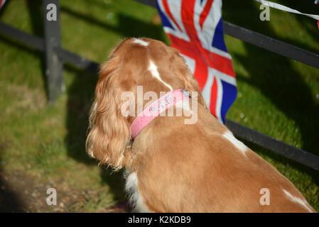Kensington Palace, London, UK. 31st Aug, 2017. Tributes cards flowers  are laid outside Kensington Palace for the - Stock Photo