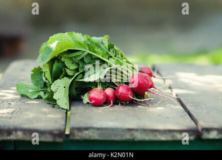 Ripe radish on wooden table background. Farmers food still life. Shallow depth field, selective focus - Stock Photo