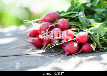 Ripe radishes on vintage wooden table background. Sunny day farmers harvest still life. Shallow depth field, selective focus