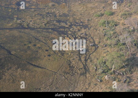 Aerial view of African Elephants moving through the Okavango Delta wetland near Maun in Botswana - Stock Photo