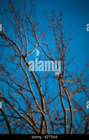 Crescent moon at blue twilight sky between bare branches of tree at foreground - Stock Photo