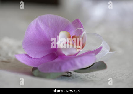 Purple orchid small bouquet for buttonhole, traditional wedding accessory used for groom and wedding guests positioned - Stock Photo