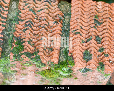 close up corrugated texture of top of brick red wall with moss and lichen pattern; England; UK - Stock Photo