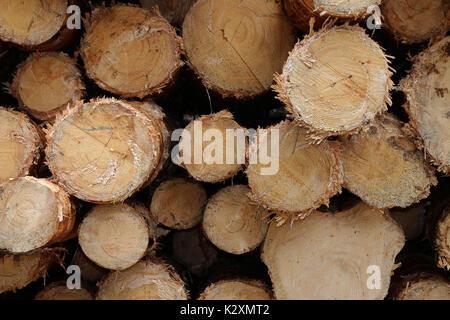 Wald, Forst, Holz, Natur, Baeume, Staemme, entrindet, Rohstoff, nachwachsend - Stock Photo