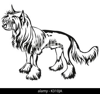Decorative portrait of standing in profile Chinese Crested Dog, vector isolated illustration in black color on white - Stock Photo