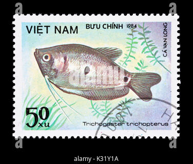 Postage stamp from Vietnam depicting  three spot gourami  (Trichogaster trichopterus) - Stock Photo