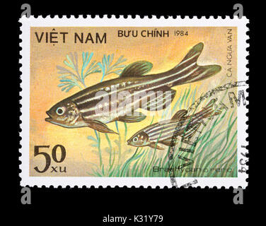 Postage stamp from Vietnam depicting a zebrafish (Danio rerio) - Stock Photo