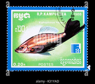 Postage stamp from Cambodia (Kampuchea) depicting a green swordtail  (Xiphophorus helleri) - Stock Photo