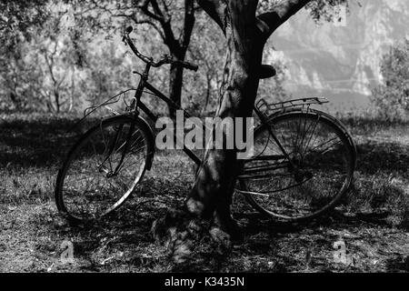 An old fashioned bicycles in the olive groves outside Riva del Garda, Italy - Stock Photo