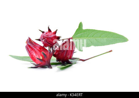 Hibiscus sabdariffa or roselle fruits on white background. - Stock Photo