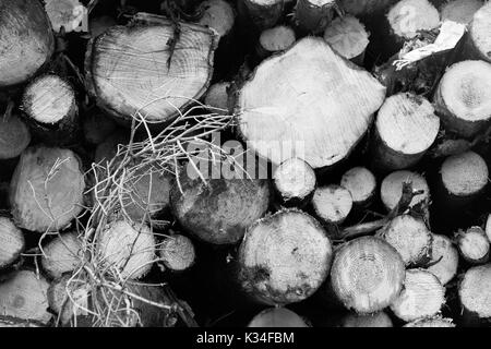 Cross section of stacked wood logs in black and white tone - Stock Photo