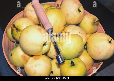 Natural wild apples grown. European wild apple, malus sylvestris. - Stock Photo