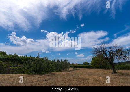 Empty dry garden in Valpolicella, Veneto ,Italy with dry empty tree on blu sky and wite clouds. Vine in background. - Stock Photo
