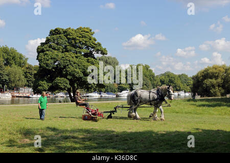 Richmond, SW London, UK. 1st Sept, 2017. On a lovely warm and sunny day, a horse drawn grass cutter is being used - Stock Photo