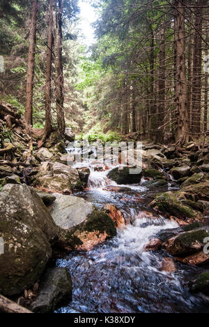 Bila Opava mountain river above Karlova Studanka spa in Jeseniky mountains with stones on water channel and trees - Stock Photo
