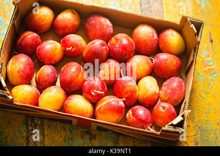British Victoria Plums - Stock Photo