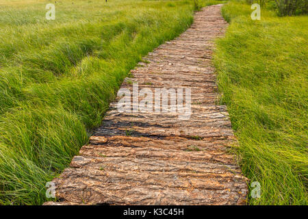 a wooden trail through the Alaytian swamp, Russia - Stock Photo