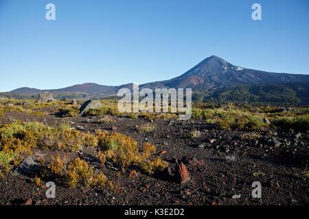 Chile, Araucania, national park Conguillio, volcano Llaima, - Stock Photo