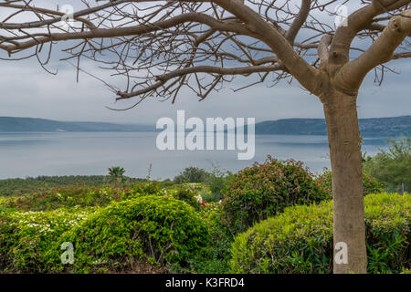 Lake of Galilee behind the tree - Stock Photo