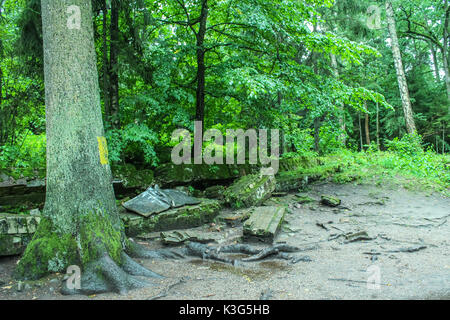 Mazuria Region, Poland. 2nd September, 2017. People walking at the Wolf's Lair remains are seen on 2 September 2017 - Stock Photo