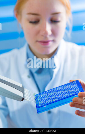 using a multi channel pipette for pcr  processing in microbiological laboratory - Stock Photo