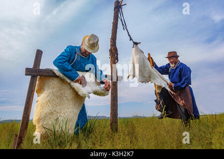 Inner Mongolia, China-July 26, 2017: Traditionally dressed old Mongolian men process the fur of sheep in a traditional - Stock Photo