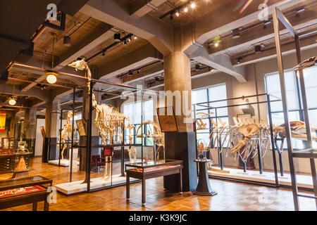Japan, Hoshu, Tokyo, Marunouchi, Kitte Building aka JP Tower, Intermediatheque Museum - Stock Photo