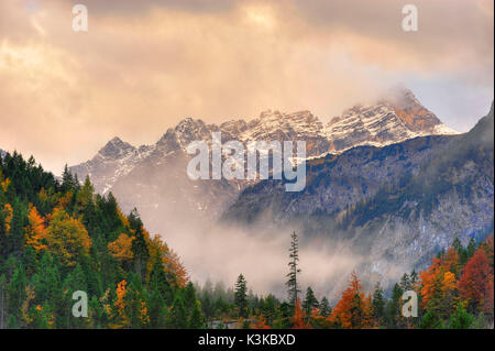 Mountain wood, single big conifer in front of the Laliderer Spitze in the Karwendel - Stock Photo