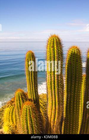 Cactuses along the edge of the cliffs of the California coast - Stock Photo